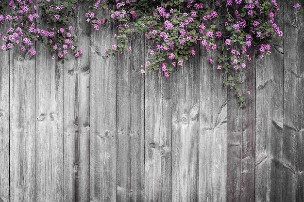 Schöner violetter blumenblütenfrühlingssommer