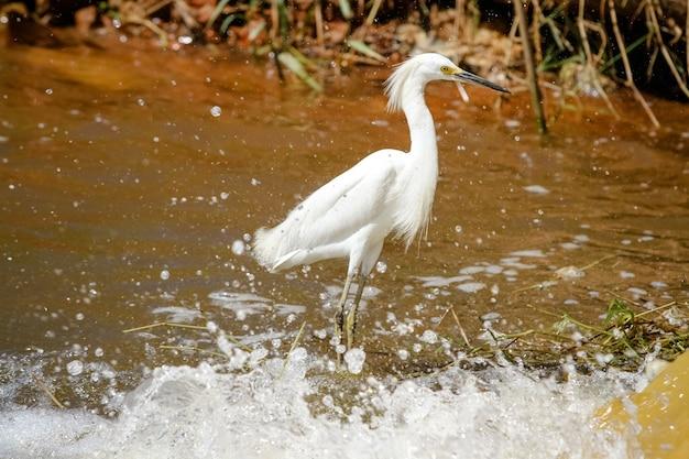 Schöner vogel auf der jagd nach fischen im teich