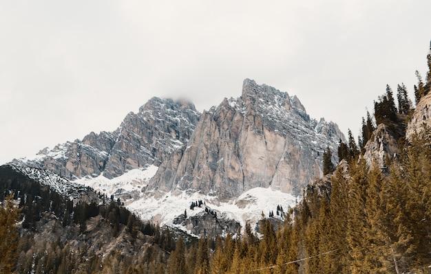 Schöner wald auf einem hügel mit hohen felsigen schneebedeckten bergen
