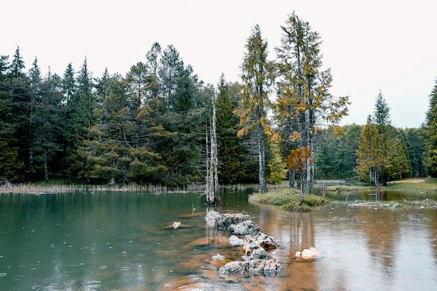 Schöner wald in einem kleinen see in opakua, baskenland, spanien