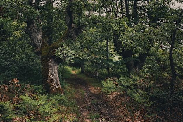 Schöner wald mit grüntönen im baskenland