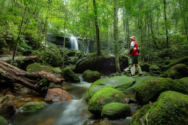Schöner waldwasserfall im dschungel im regenwald