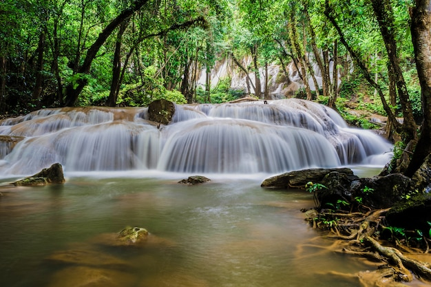 Schöner wasserfall im grünen wald