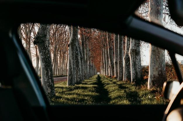 Schöner weg der baumlandschaft bei sonnenuntergang. blick aus dem auto. natur- und reisekonzept