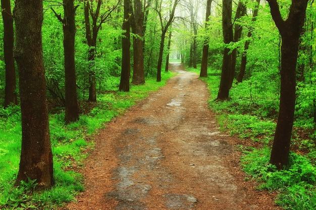 Schöner weg im sommerwald