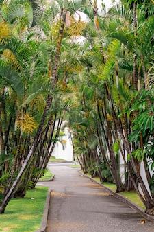 Schöner weg mit kokosnussbäumen