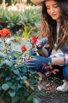 Schöner weiblicher gärtner, der die rose mit gartenscheren schneidet