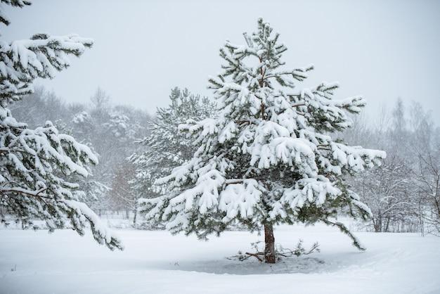 Schöner weihnachtsbaum auf einem weißen naturhintergrund. winterlandschaft mit schneebedeckten bäumen und schneeflocken.