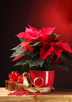 Schöner weihnachtsstern im blumentopf und geschenke auf holztisch auf rotem hintergrund