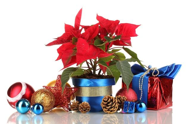 Schöner weihnachtsstern mit weihnachtskugeln und geschenken isoliert auf weiß