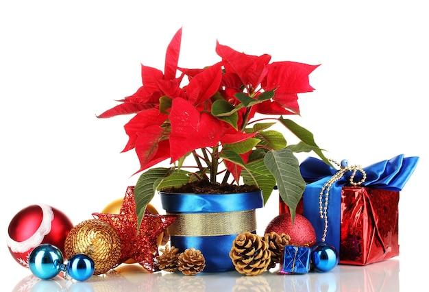 Schöner weihnachtsstern mit weihnachtskugeln und geschenken lokalisiert auf weiß