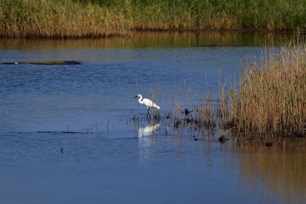 Schöner wilder vogel am natürlichen see