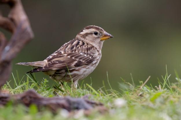 Schöner wilder vogel