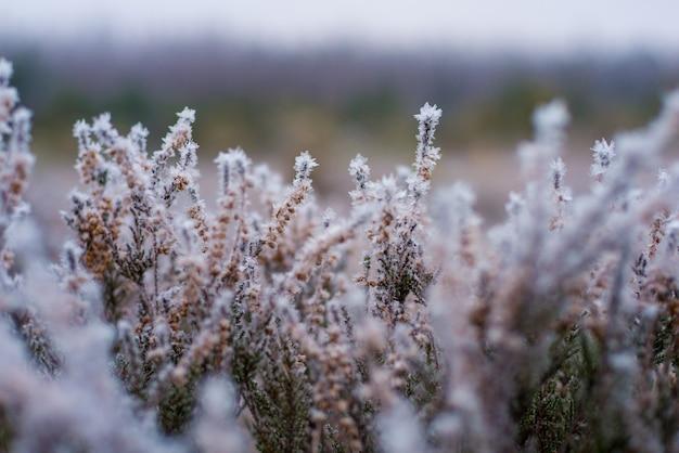 Schöner winterhintergrund, raureif auf einem sumpf