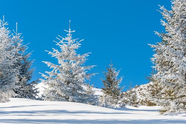 Schöner winterwald mit schneebedeckten bäumen an einem hellen sonnigen tag