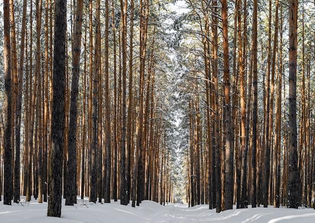 Schöner winterwald mit skispur