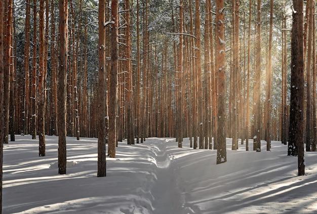 Schöner winterwald mit sonnenlicht. wunderbarer ort zum entspannen und wochenende