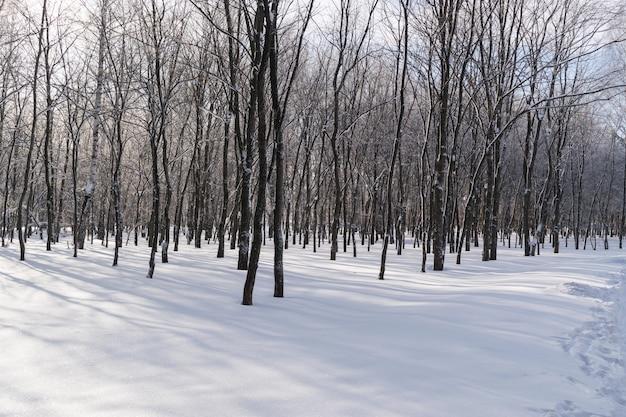 Schöner winterwald oder park im schnee