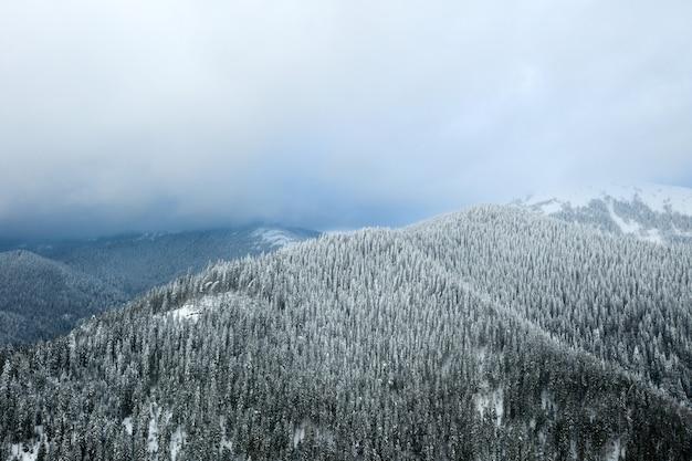 Schöner winterwald und die straße