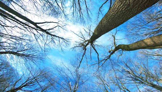 Schöner winterwald und himmel