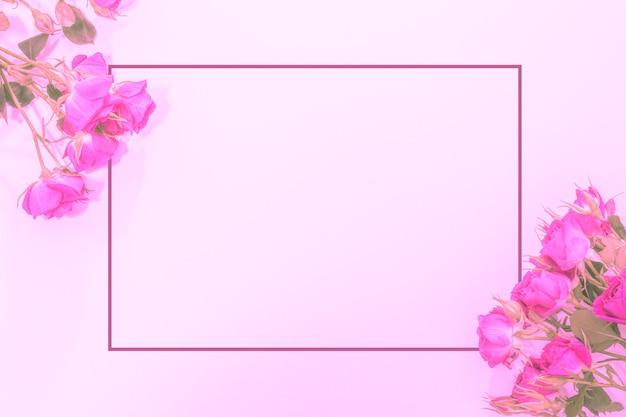 Schöner zarter hintergrund mit rosa rosen und einem rahmen für ihren text. flache lage, hintergrund für glückwünsche, vorlage.
