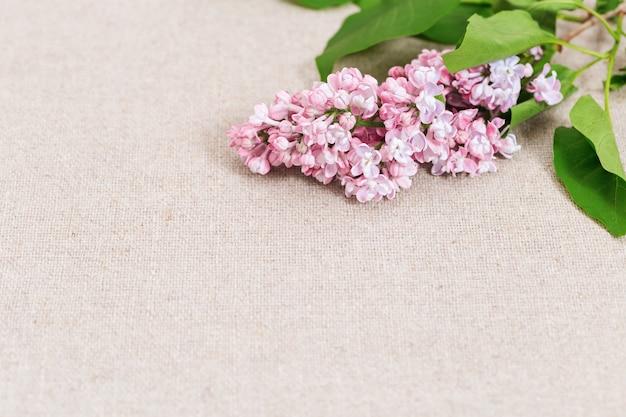 Schöner zweig des blühenden rosa flieders. blumiger hintergrund mit flieder. speicherplatz kopieren.