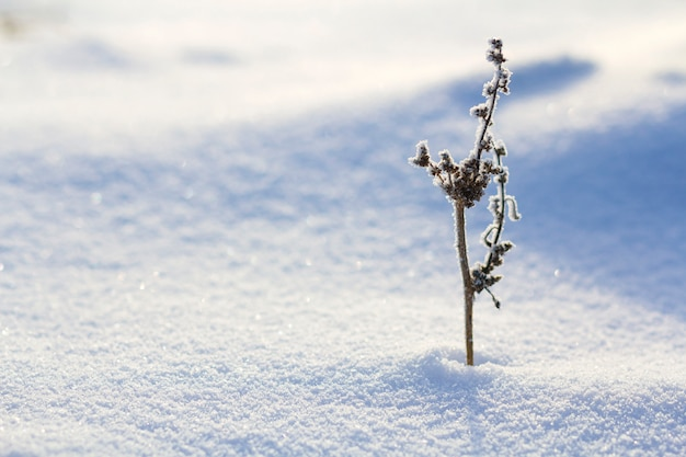 Schönes abstraktes kontrastbild der trockenen wildblumenanlage bedeckt mit frost