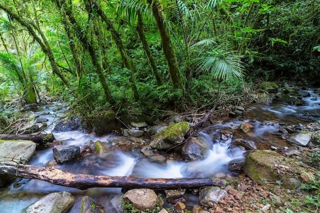 Schönes bachwasser, das im regenwald fließt. costa rica, mittelamerika