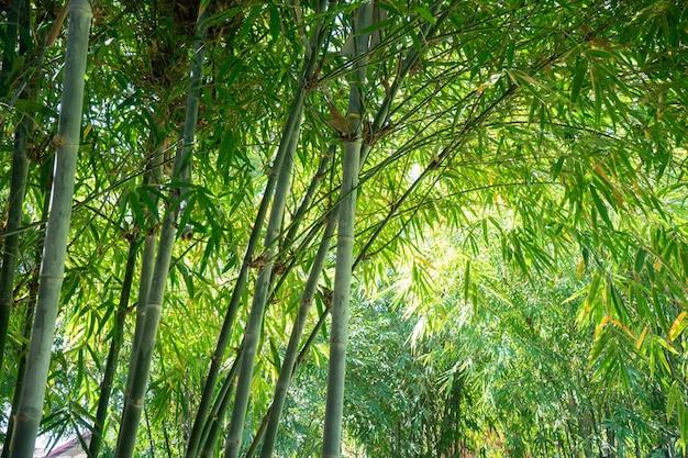Schönes bambusblatt- und baumbild für asien-themenlebensstilhintergrund.