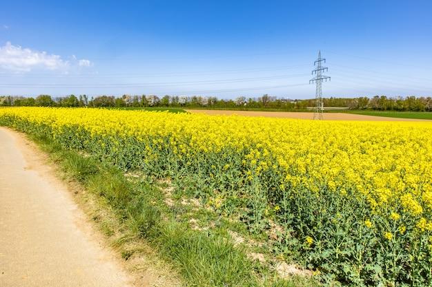 Schönes bastfeld mit grünen wildblumen und einem blauen himmel