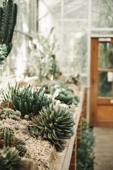 Schönes bild von verschiedenen kakteen im sand - perfekte tapete für kaktusliebhaber