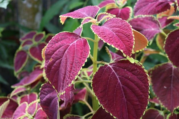Schönes blumenblatt