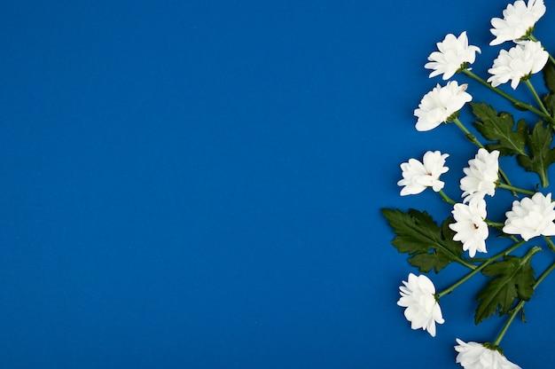 Schönes blumenlayout. weiße blumen auf einem blauen raum. glücklicher frauentag, muttertag. flache lage, draufsicht, kopierraum