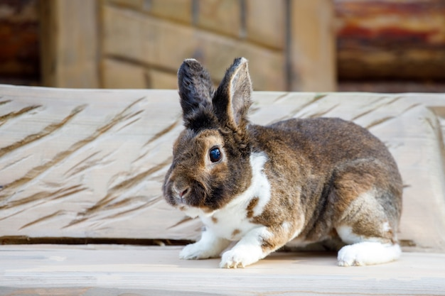 Schönes braunes kaninchen, das auf einer bank im dorf sitzt