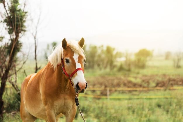 Schönes braunes pferd auf dem land