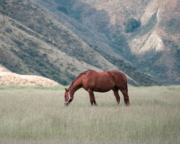 Schönes braunes pferd, das gras auf dem feld auf dem gebirgskettenhintergrund isst