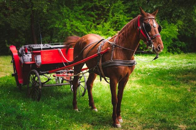 Schönes braunes pferd und eine pferdekutsche auf einer grünen wiese