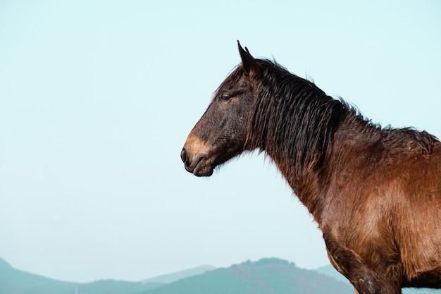 Schönes braunes pferdeporträt auf der wiese