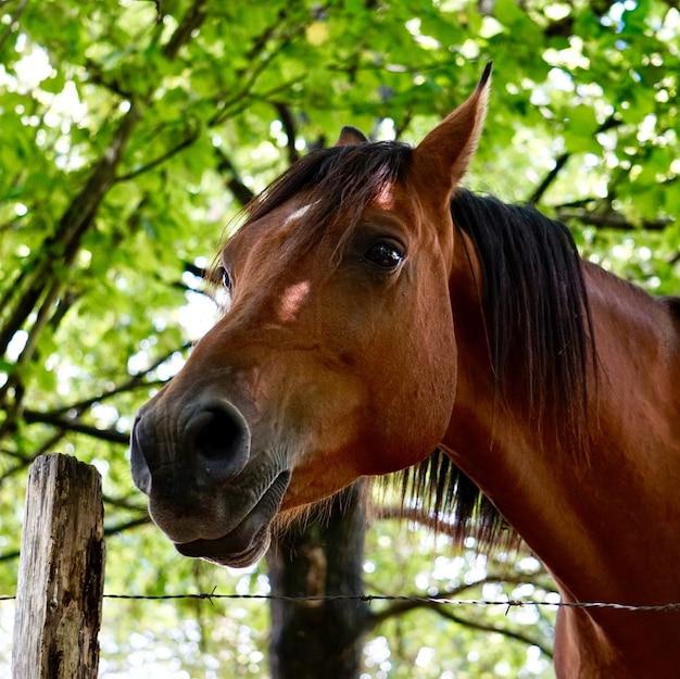 Schönes braunes pferdeporträt im berg