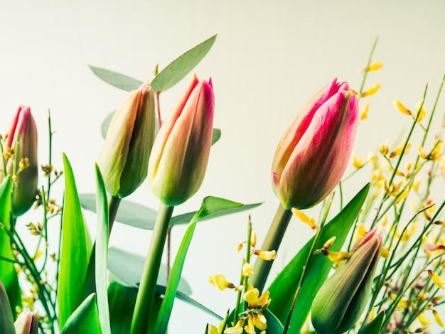 Schönes bündel tulpen auf pastell