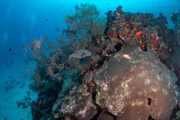 Schönes buntes korallenriff und tropische fische unterwasser in malediven