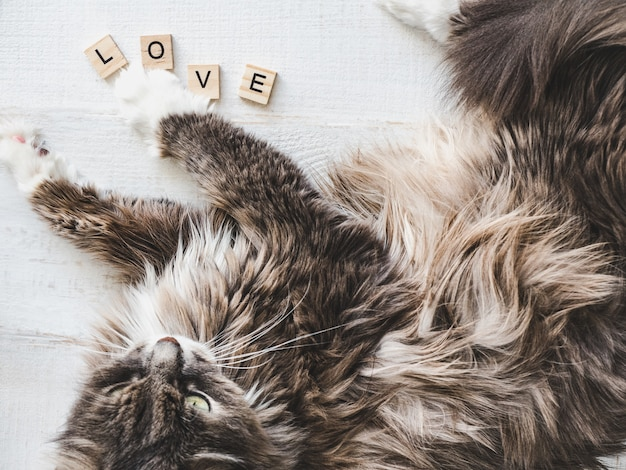 Schönes, charmantes kätzchen