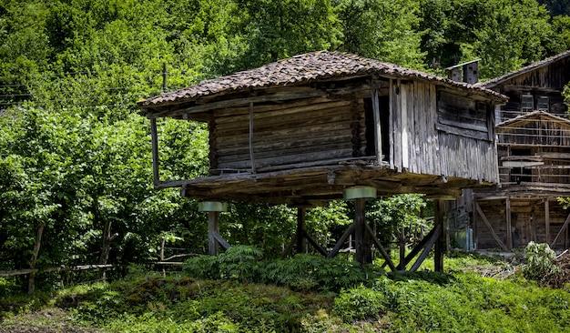 Schönes dorfhaus unter den bäumen in einem wald, der in der schweiz gefangen genommen wird