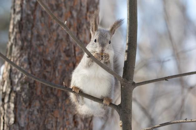 Schönes eichhörnchen auf einem baum im wald.