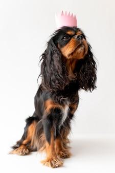 Schönes englisches spielzeugspanielhundehaustierporträt
