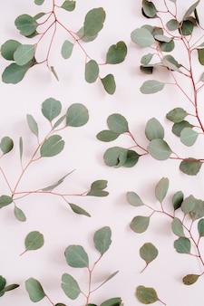 Schönes eukalyptuszweigmuster auf blassem pastellrosahintergrund. flache lage, ansicht von oben
