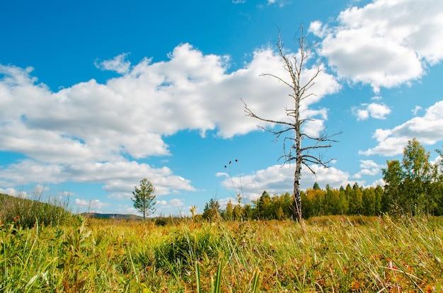 Schönes feld mit einer birke ohne blätter auf einem hintergrund des blauen himmels und der wolken. herbstlandschaft.