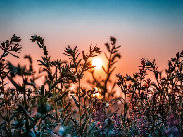 Schönes feld mit gras und blumen im sonnenlicht des frühen morgens