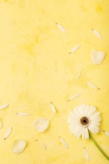 Schönes gänseblümchen und blumenblätter mit gelbem kopienraumhintergrund