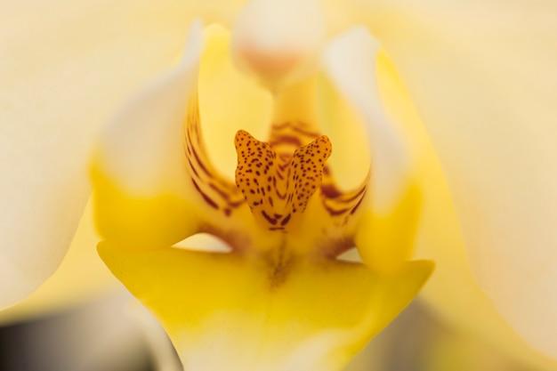 Schönes gelbes blumenblatt der frischen blume
